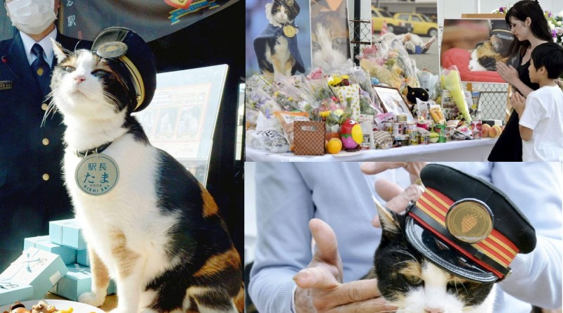 Tama, a cat stationmaster of a railway station in western Japan, attends an event at her Kishi Station in Wakayama Prefecture in this file photo taken in January 2013. The female tortoiseshell cat died June 22, 2015, at a local animal hospital aged 16 years and two months, the equivalent of about 80 years in human age, Wakayama Electric Railway Co. said June 24. (Kyodo) ==Kyodo