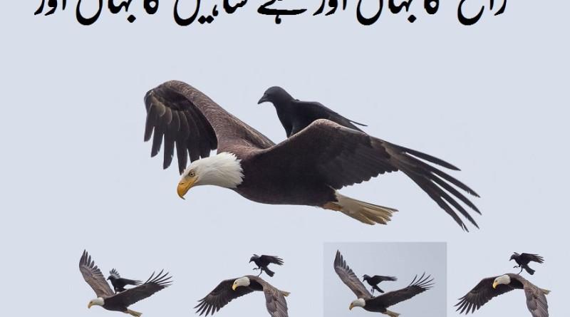 hawk  0
